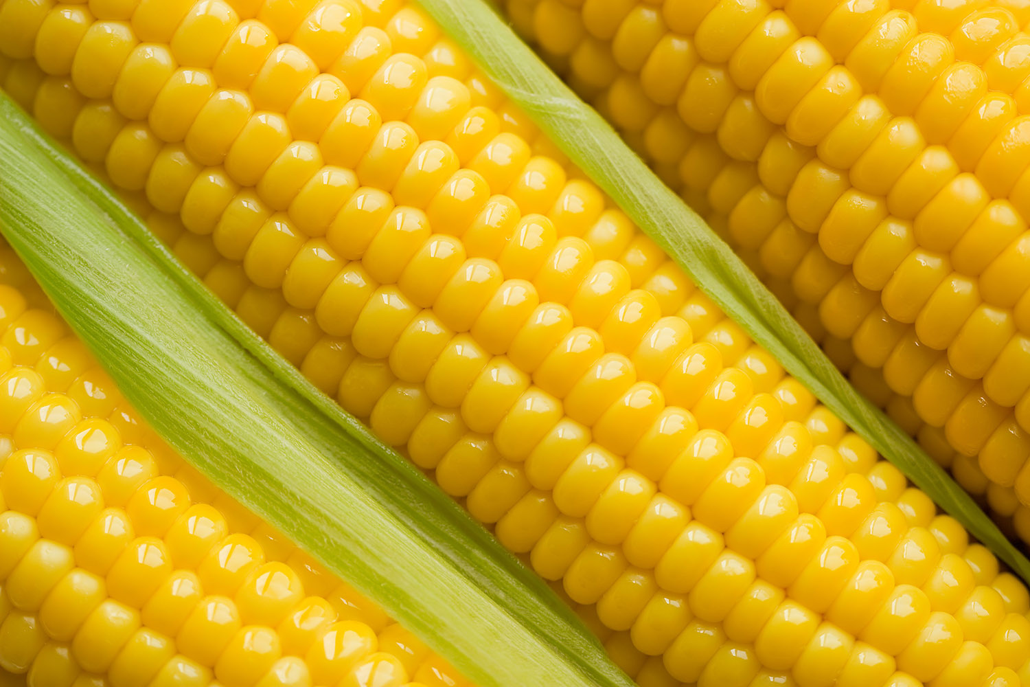 Corn, beautiful corn