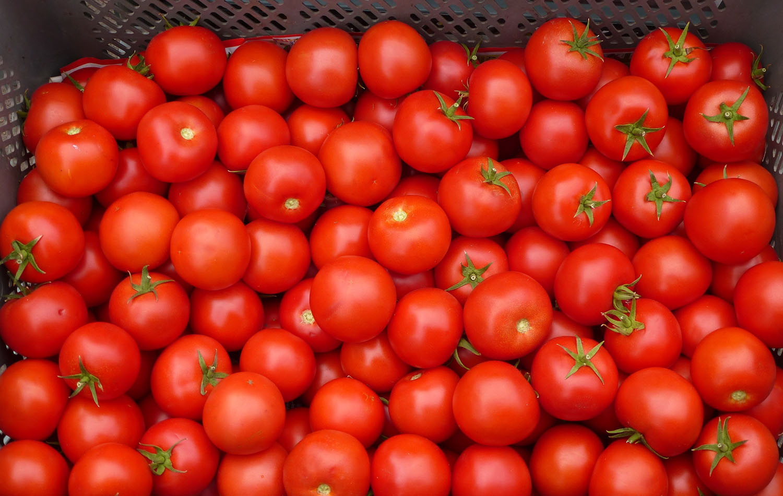 Tomato Kasundi