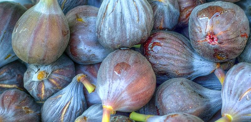 Figs Figs Figs